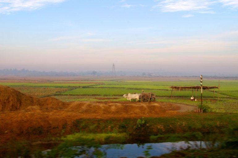 Myanmar: Landschaft mit Wasserbüffel