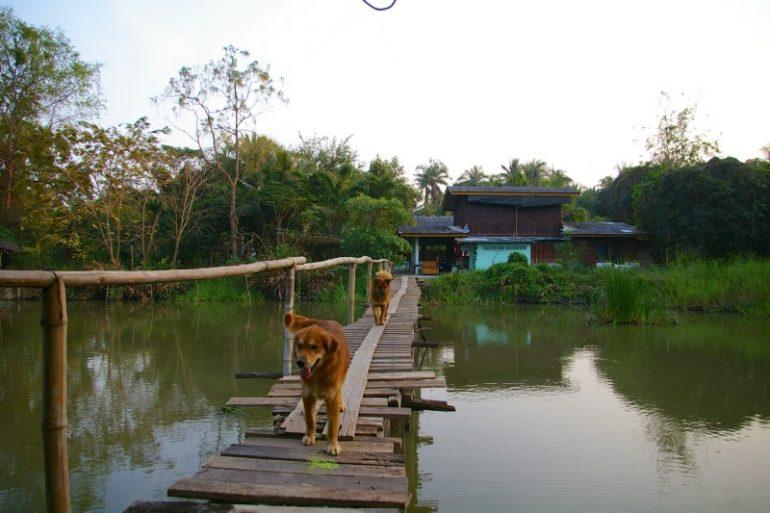 Mietwagen Thailand: Dato Farm