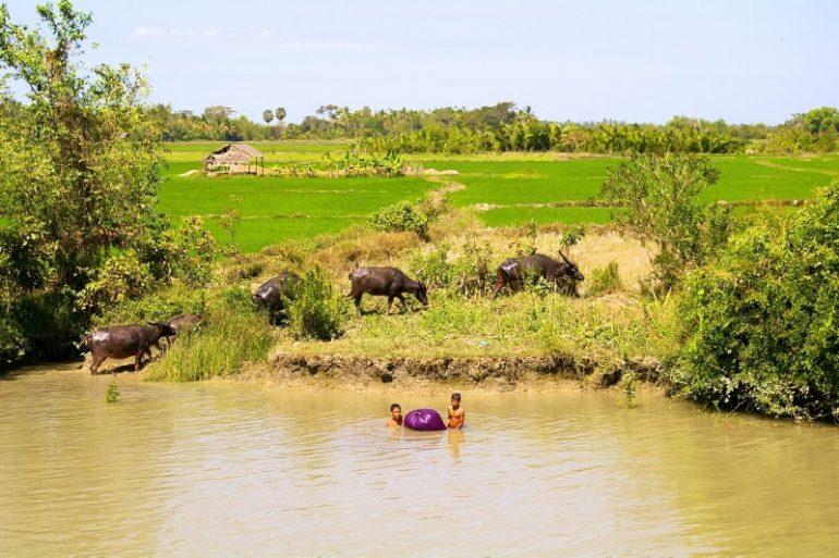 Ayeyarwaddy: Kinder sielen im Fluss neben Wasserbüffeln