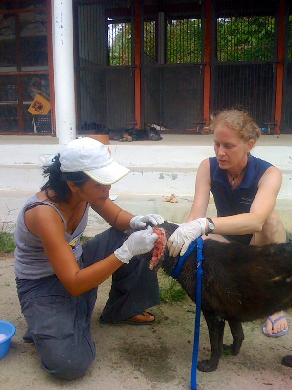 Phangan Animal Care: Nurses and a dog