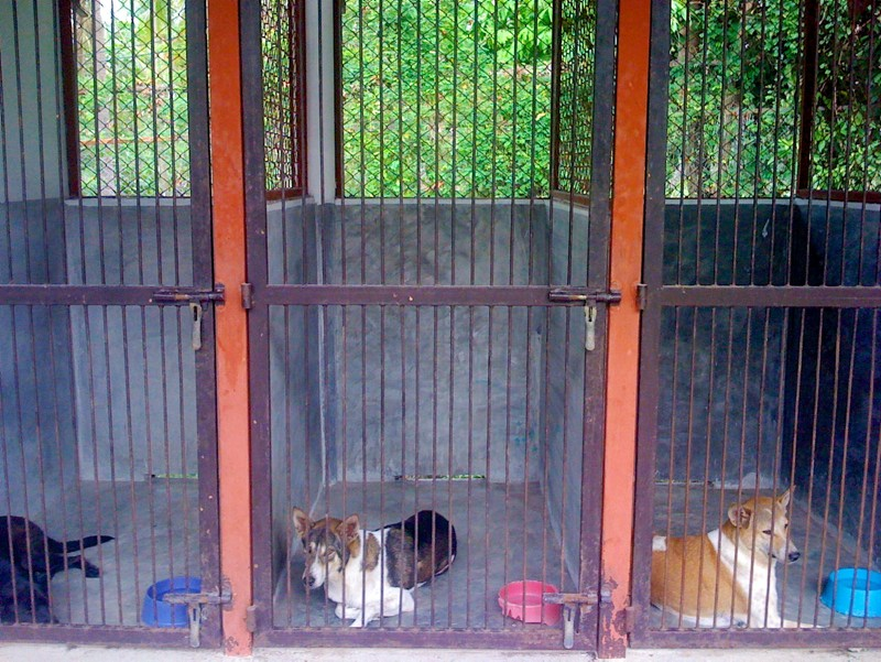 Phangan Animal Care: Dogs in cages