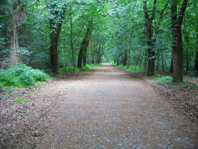 Berlin Wall Trail: Path through the forest