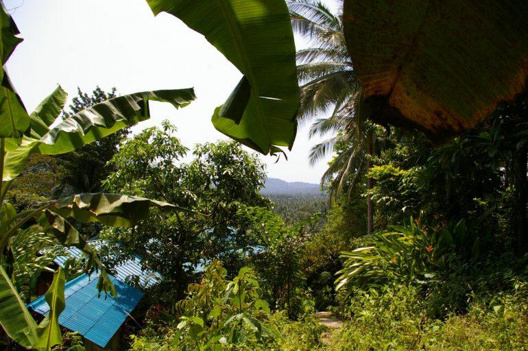 Khao Ra: Dschungelpfad nach oben