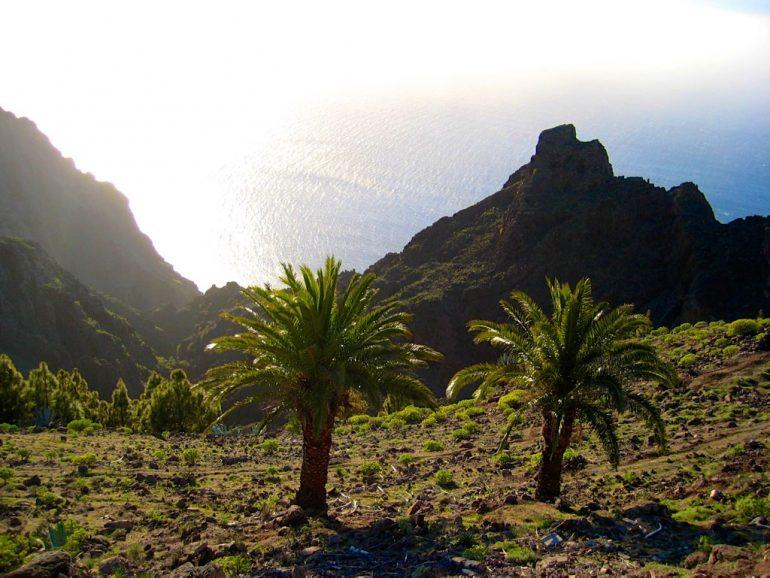 Gomera Highlights: Palmen und Felsen vor Meer