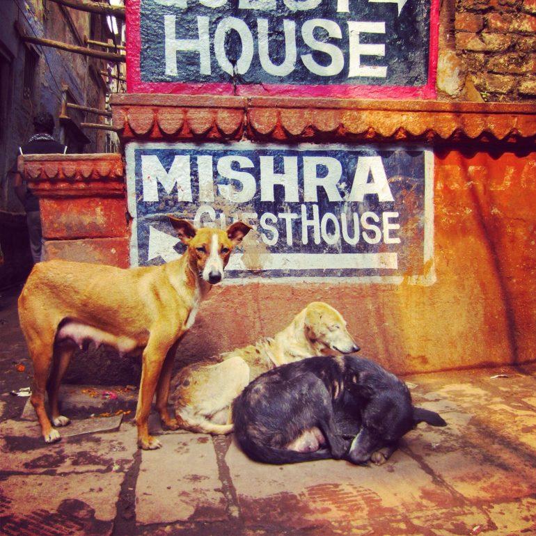 Hunde or einem Schild in Varanasi