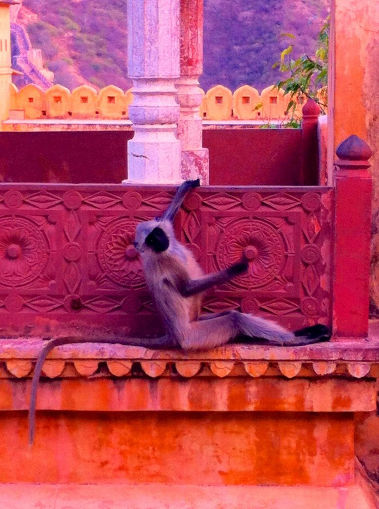 Renting an Enfield in India: Monkey in front of a column