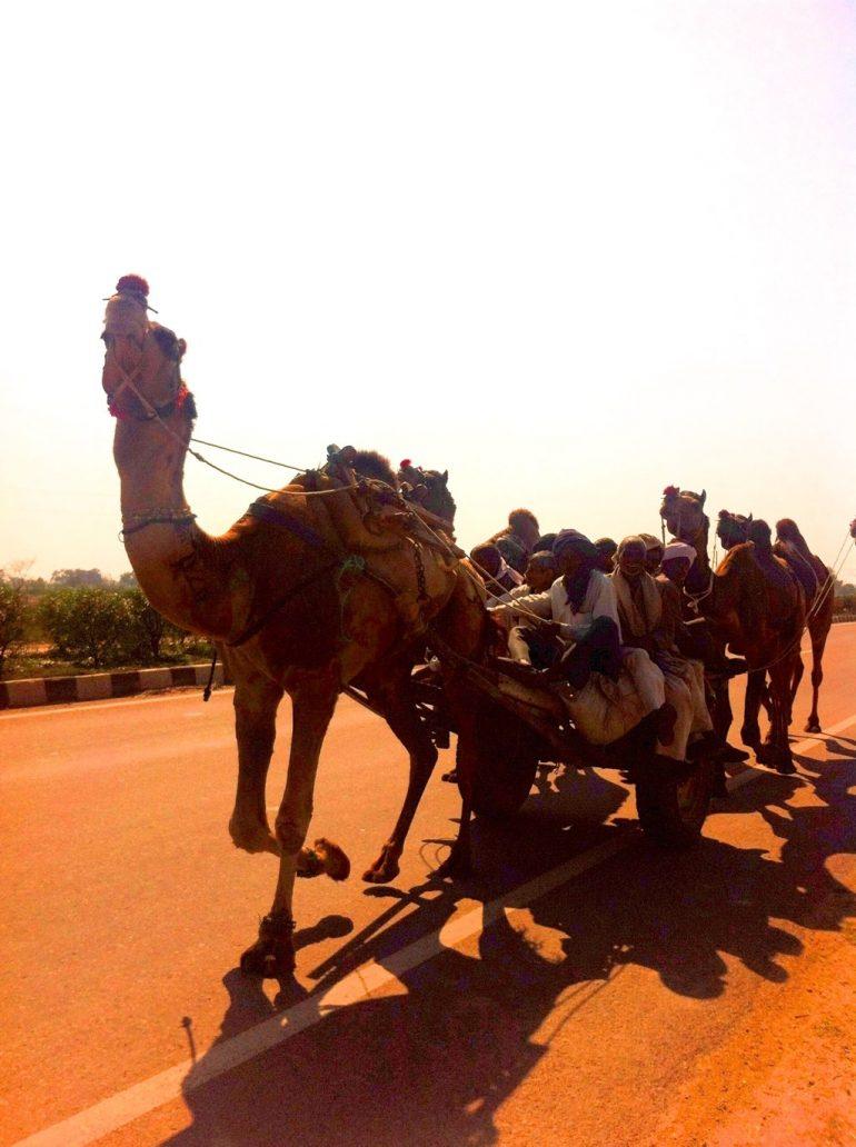 Menschen auf einer kamelgezogenen Kutsche in Rajasthan