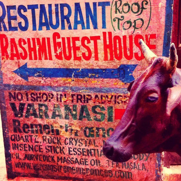 Kuh vor einem handgemalten Schild in Varanasi