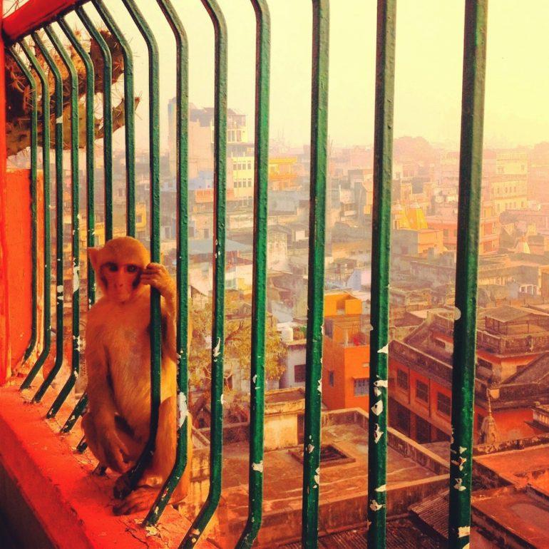 Affe vor Gitterstäben in Varanasi