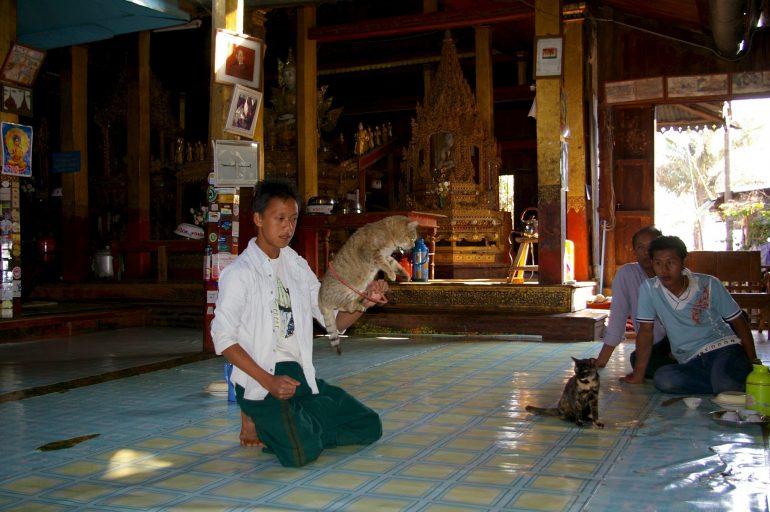 Mönche und Katzen in einem Tempel in Myanmar