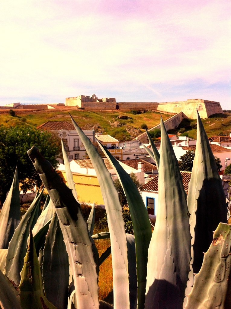 Algarve insider tips: Plants houses and walls in Monte Gordo