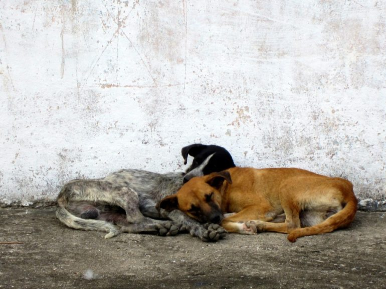 Budget travel: Two dogs sleeping