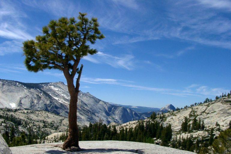 Lieblingsfotos: Baum im Yosemite National Park