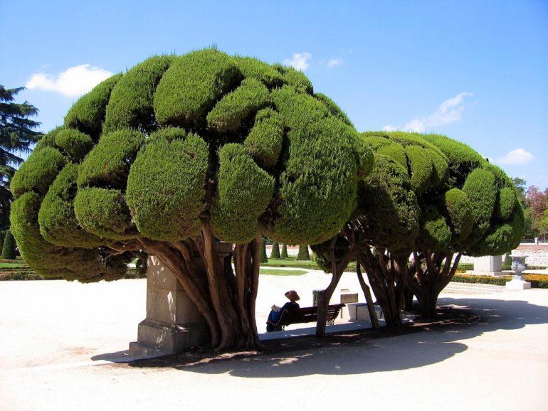 Lieblingsfotos: Frau auf einer Bank unter Bäumen in Madrid, Spanien