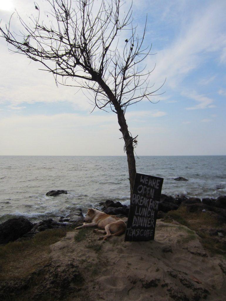 Hund neben einem Baum auf einem Felsen vor Meer in Goa Indien