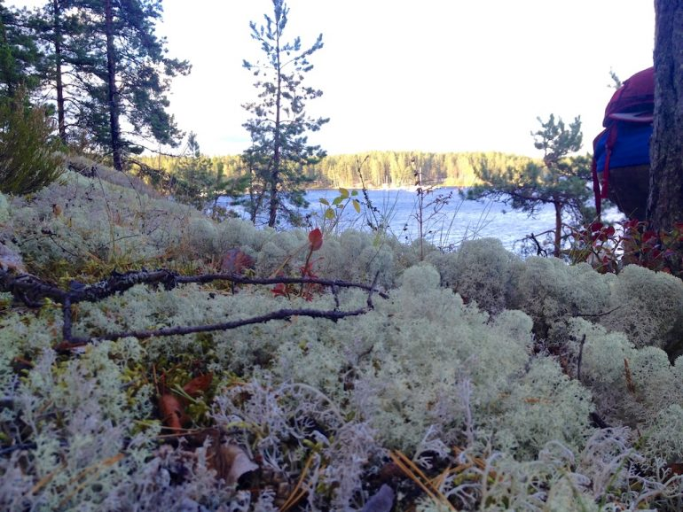 Blick über weißes Moos auf einen See in Finnland