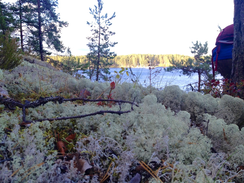 Moss und Seen: Eine ganz schöne Kombination!
