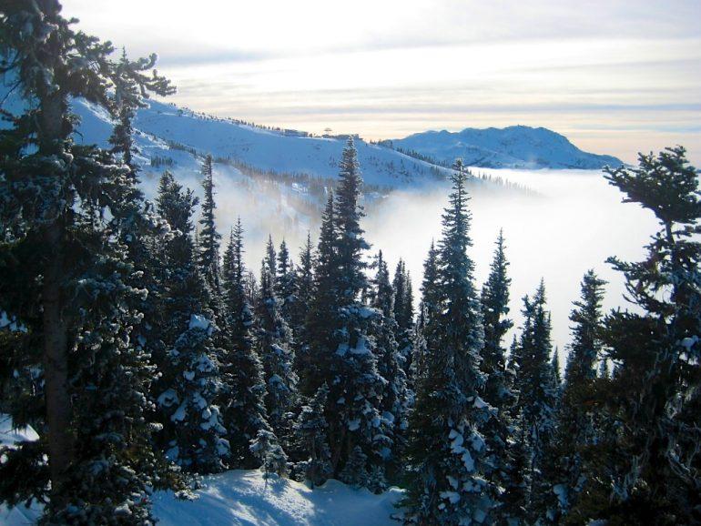 Schneebedeckte Tannen und Berge in Whistler