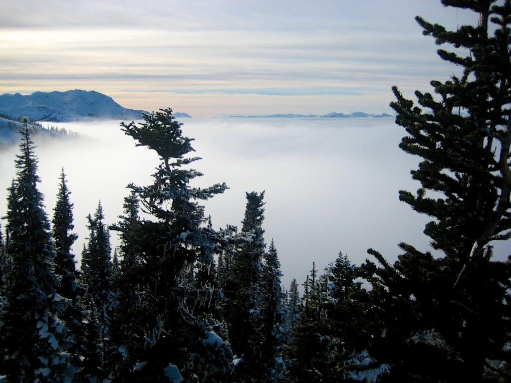 Whistler im Nebel