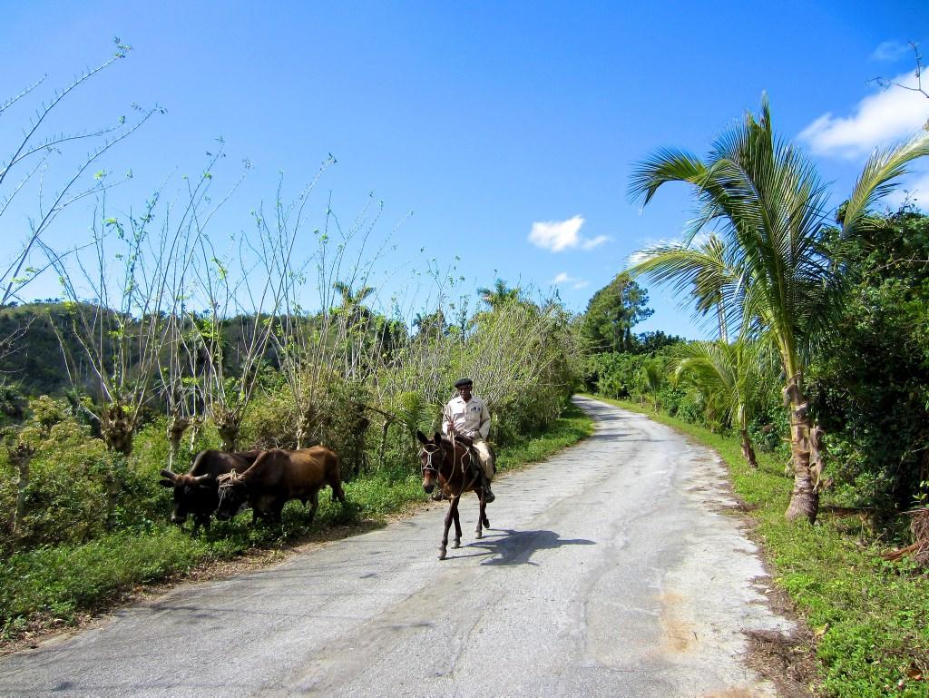 Radreise Kuba: Ein Vaquero in der Wildnis nicht weit von Las Terrazas
