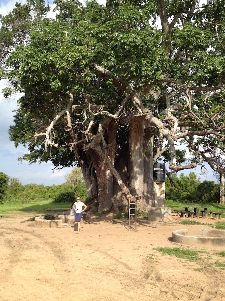 Baobab-Baum mit Teilnehmern einer Tansania Safari