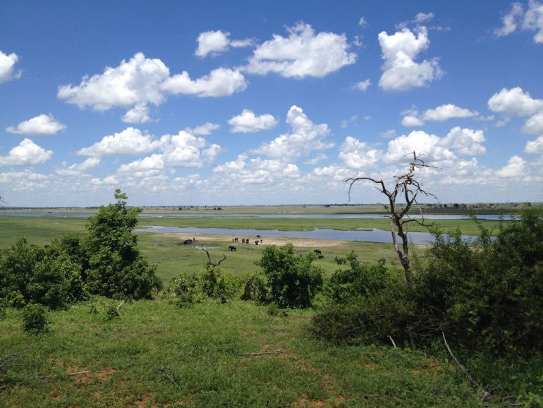 Blick über den Chobe River mit Tieren