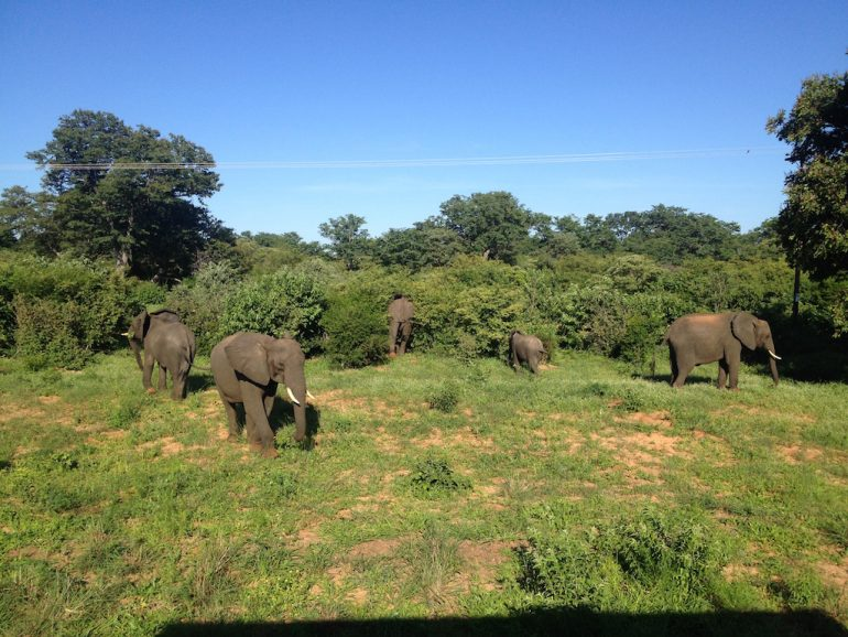 Elefanten am Strassenrand in Botswana