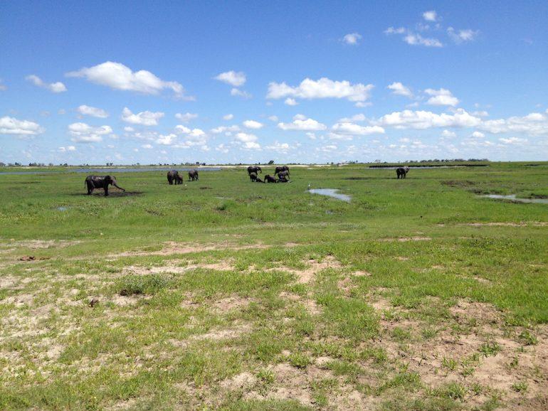 Elefanten im Chobe National Park während einer Afrika Rundreise
