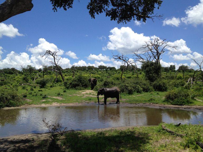 Wasserloch mit Elefanten im Chobe National Park während einer Afrika Rundreise