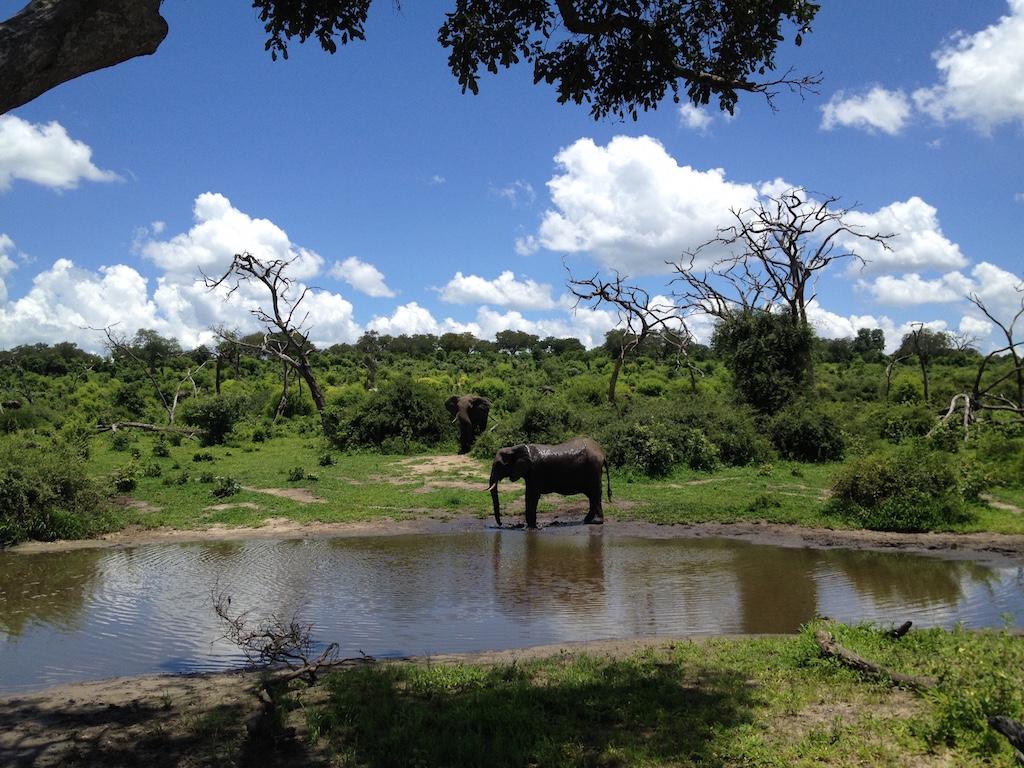 Wasserloch im Chobe National Park
