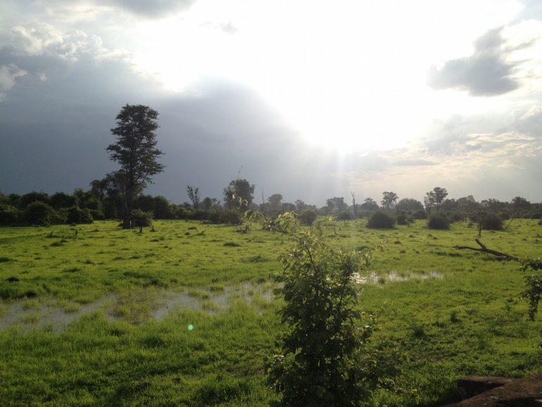 Die Sonen scheint durch die Pflanzen im South Luangwa National Park