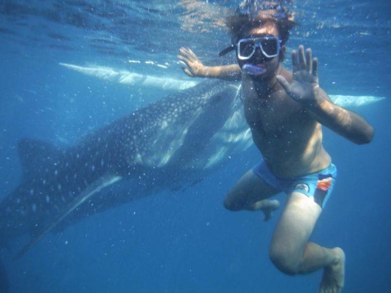 Marco Buch mit Walhai in Cebu Philippinen