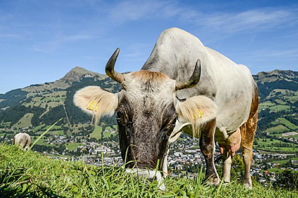 © Kitzbüheler Alpen Marketing