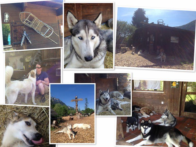 Hunde auf derHusky-Ranch in Tirol