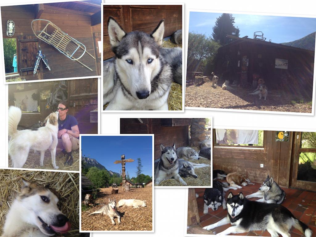 Die Husky.-Ranch im Überblick: Martin Eigentler, Totempfahl, und natürlich eine Menge Hunde!