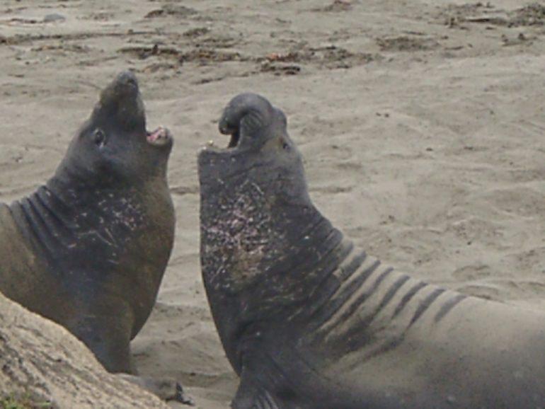 Road Trip Kalifornien: Robben an der kalifornischen Kueste