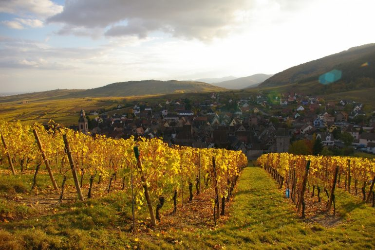 Best road trips: Vineyard and village in Alsatia
