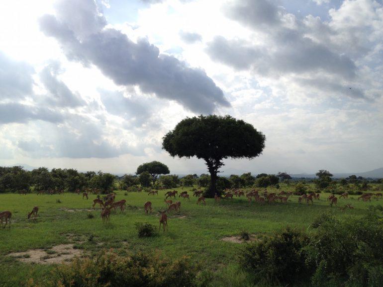 Schöne Fotos: Gazellen im Mikumi National Park, Tansania