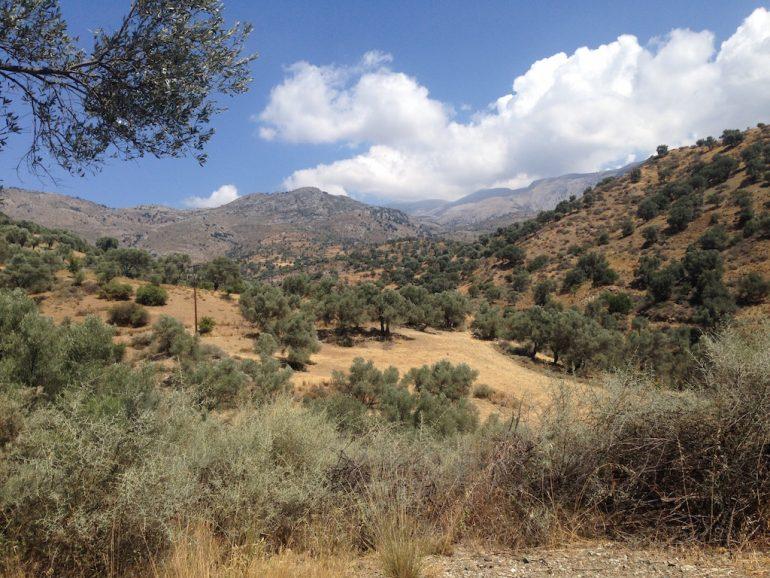 Kreta Highlights: Landschaft mit Bäumen bei Platanos