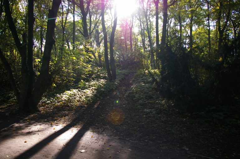 Berlin außergewöhnlich: Park im Morgenlicht
