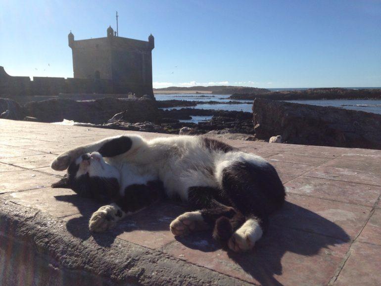 Katze und alte Gebäude in Essaouira