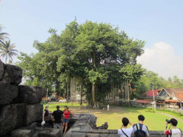 Bodhi Baum und Besucher nahe Jogja