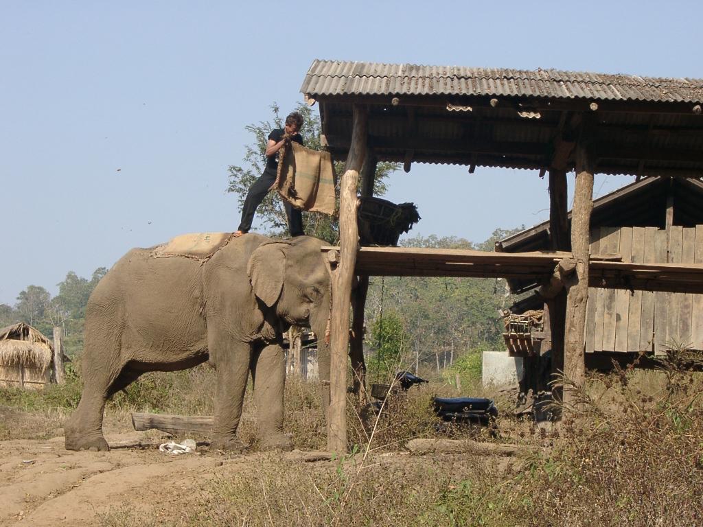 Elefantencamp Nordthailand