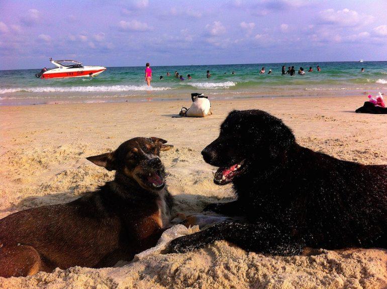 Thailand Highlights: Hunde am Strand von Ko Samet