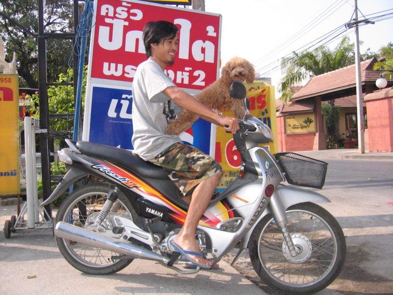 Thailand Highlights: Mann mit Hund auf Moped