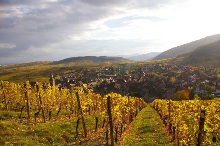 Weinberg und Dorf in Riquewihr