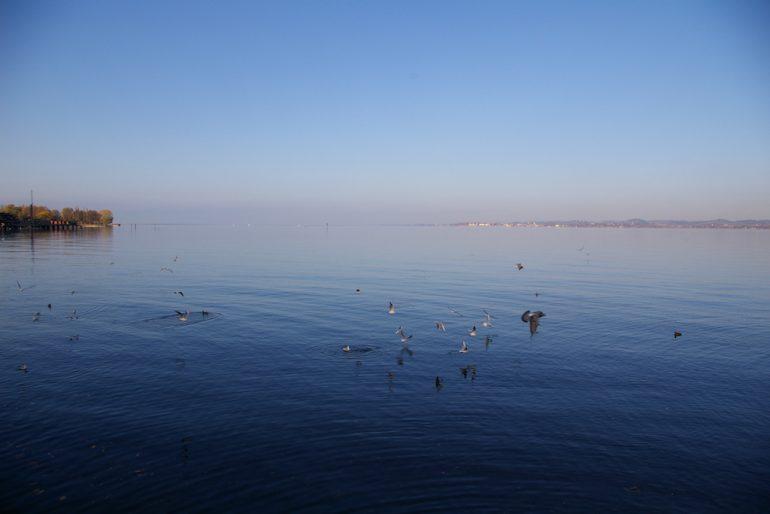 Vögel und Insel am Bodensee