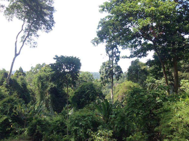 Dschungel auf dem Weg zum Gunung Raya