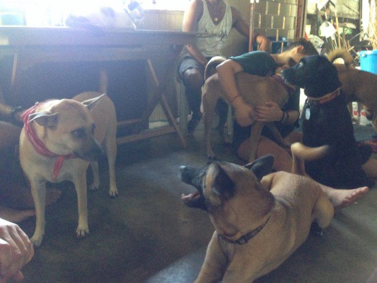 Hunde und Helfer bei Jeff Ariffin
