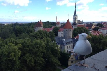 Baltikum: Die Altstadt von Tallinn